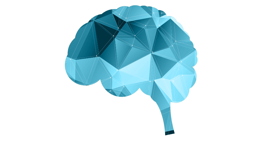 Brain formation